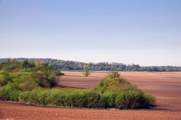 Spring fields by LotaLota