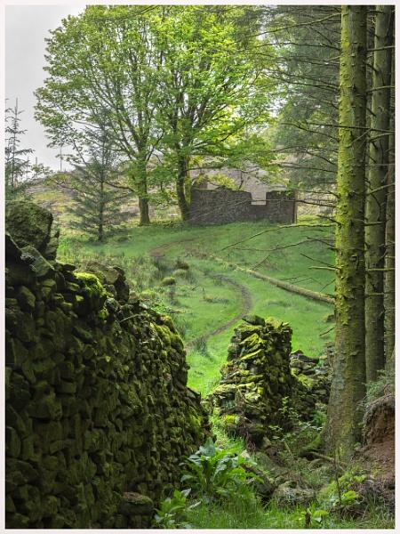 Woodland Ruin by JelFish