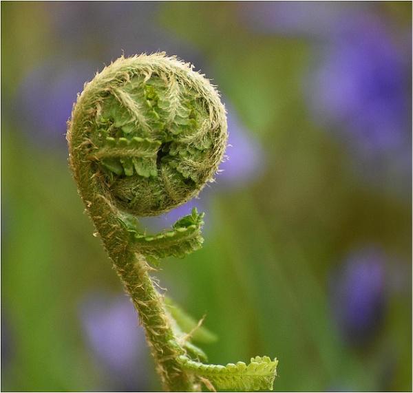 Spring by MalcolmM
