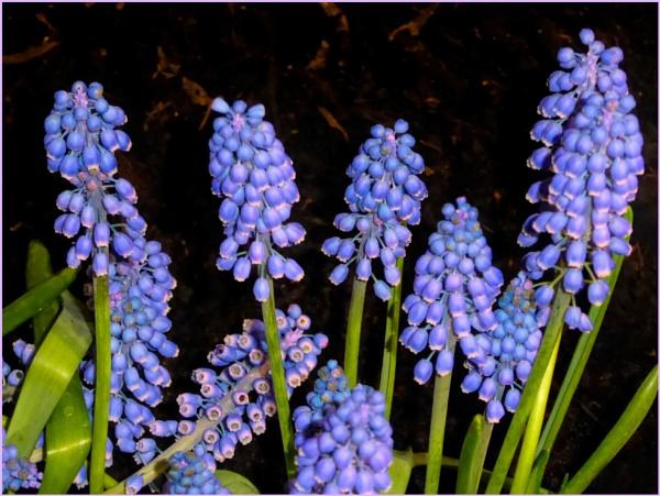 Blue Magic by Joline