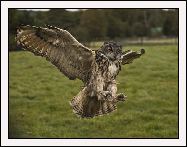 Eagle Owl by Maiwand