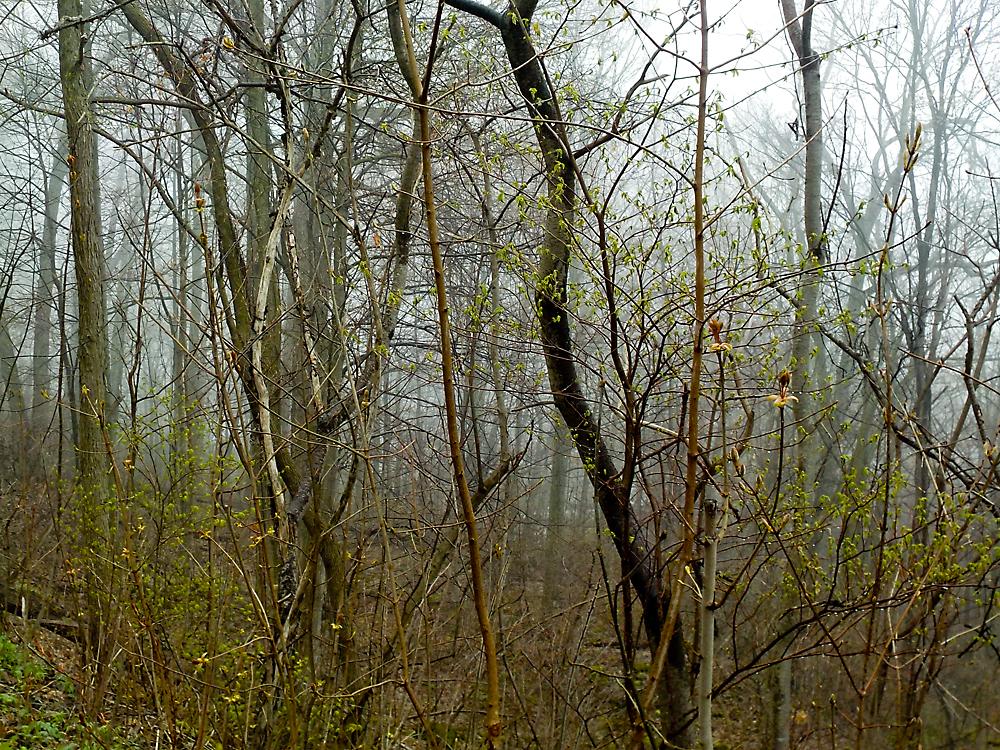 FOG on the Wenthworth Trail in Hamilton, ON