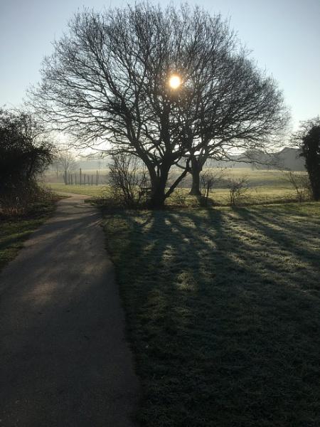 Morning walk  by SusanKing