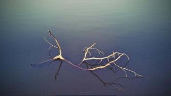 when nature dies