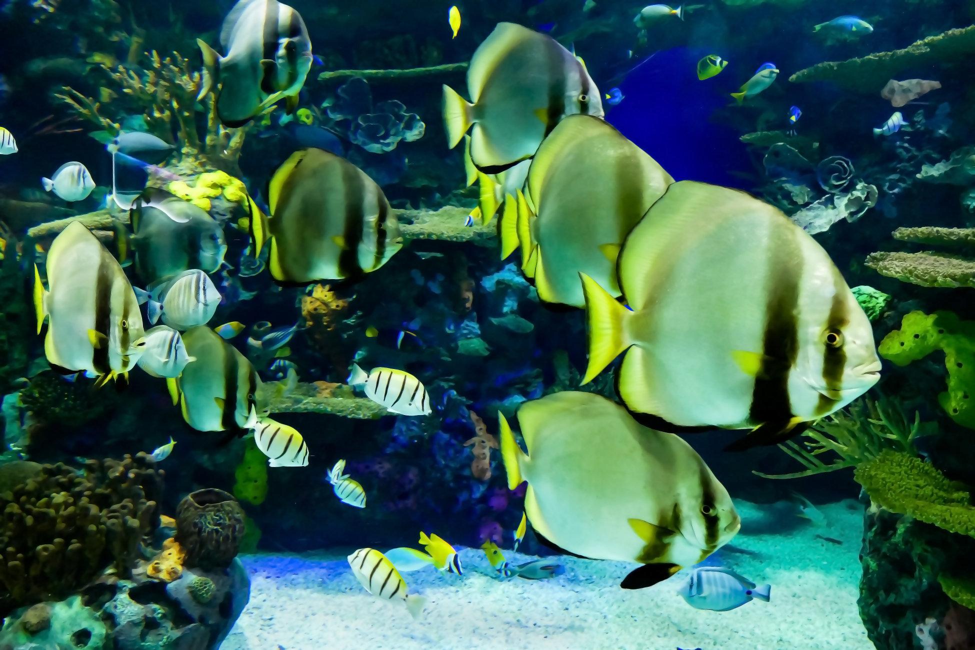 Aquarium Moment