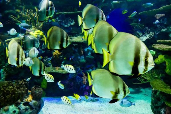 Aquarium Moment by manicam