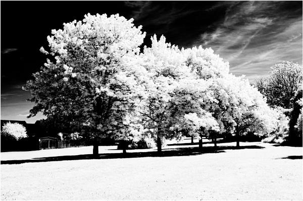 IR Trees by Nikonuser1