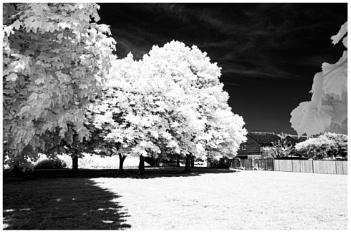 IR Trees 3