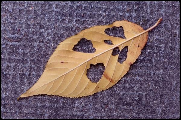 the wailing leaf by FabioKeiner