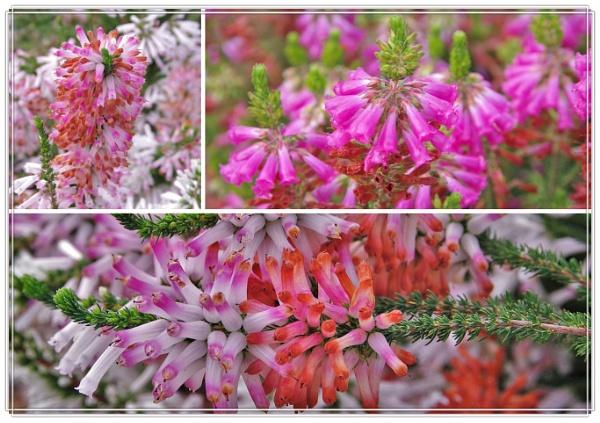 Autumn Floral Burst by dales