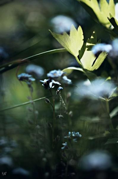 backyard microcosmos by HarmanNielsen