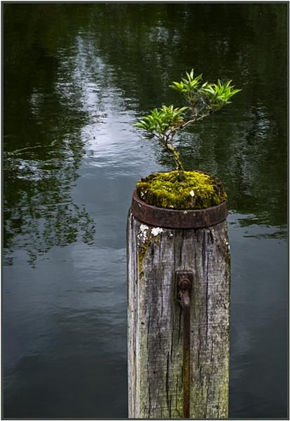 Balancing Act??? by AlfieK