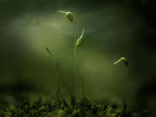 ...dark love story by KristinaZvinakeviciute