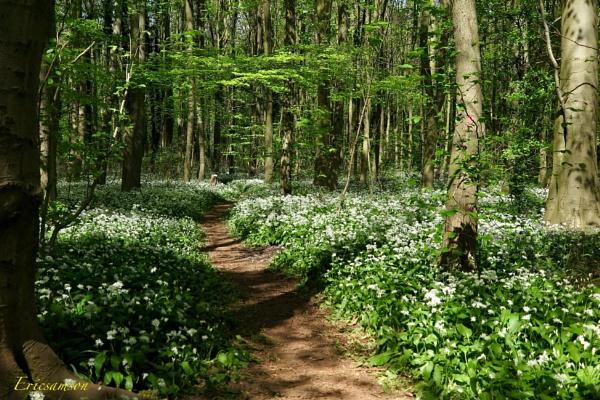 Woodland walk 2 by Ericsamson
