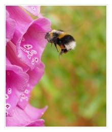 Photo : Bee