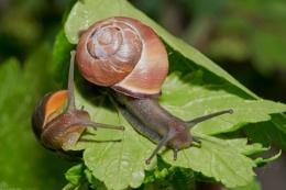 Copse snails II