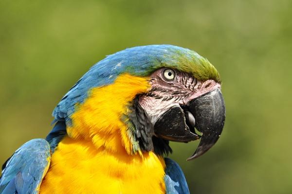 parrot by elmer1