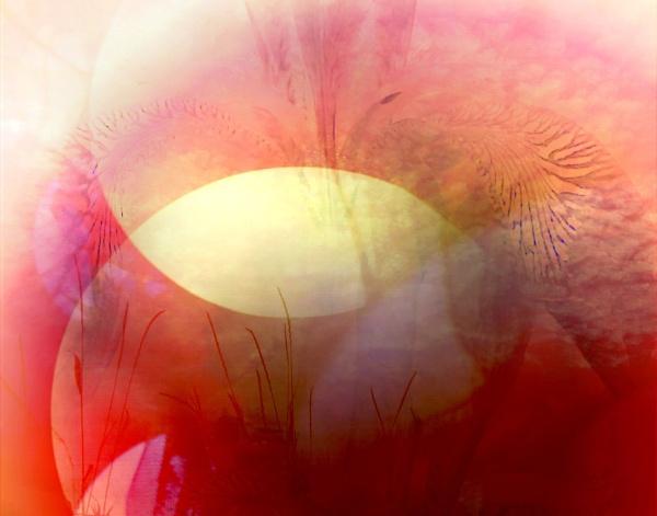Fading Iris by helenlinda