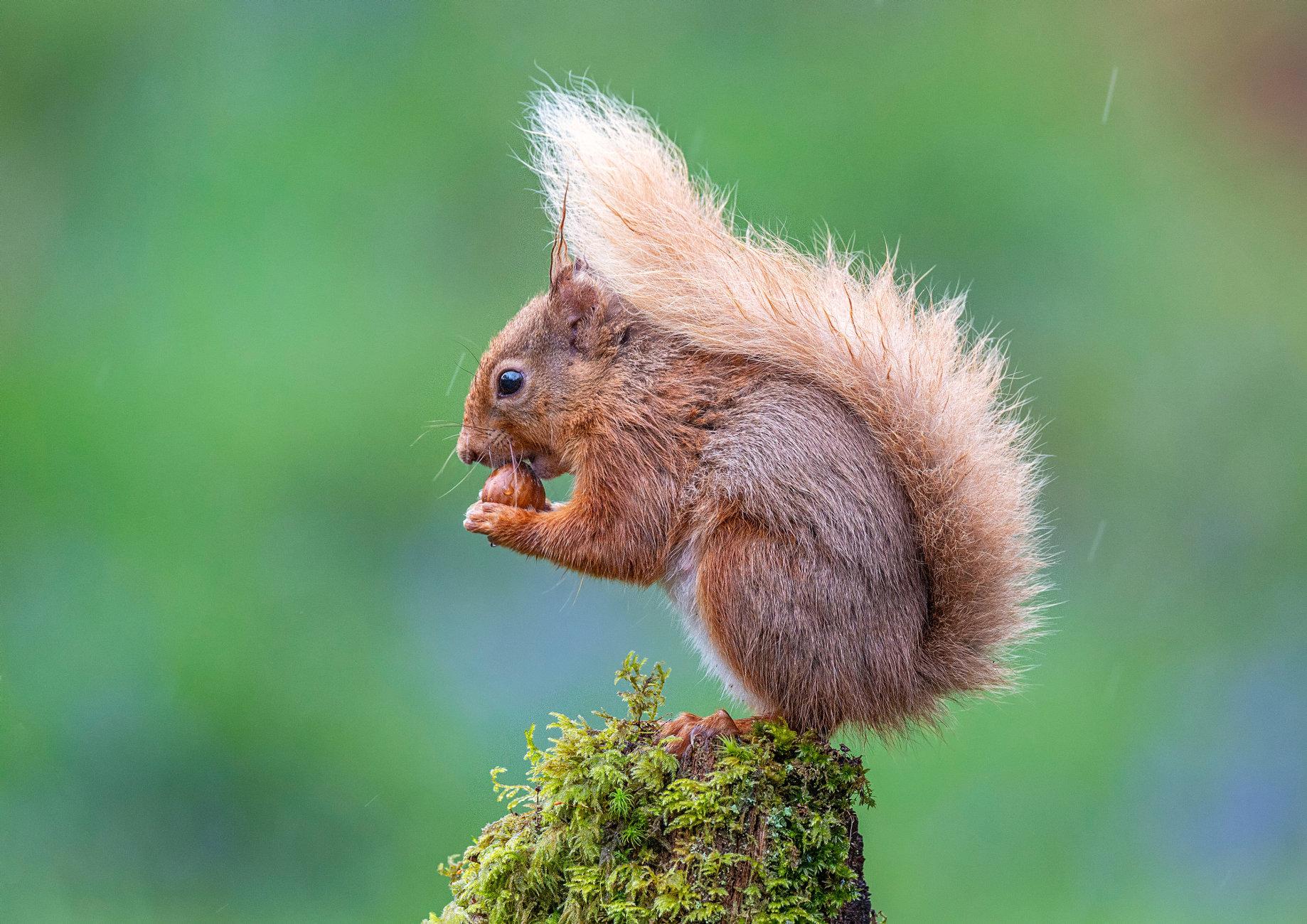 I Love Nuts