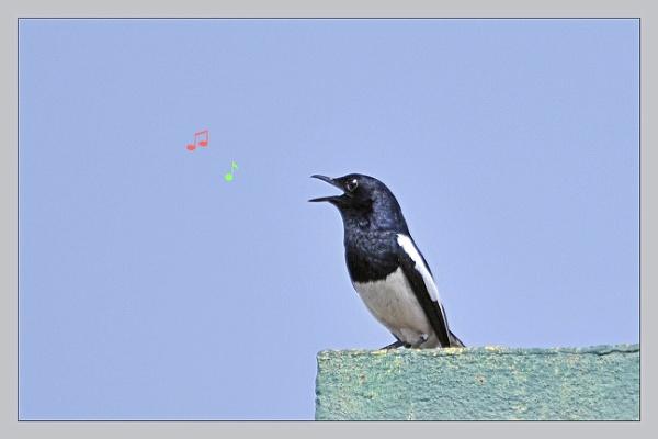 Morning Song by prabhusinha