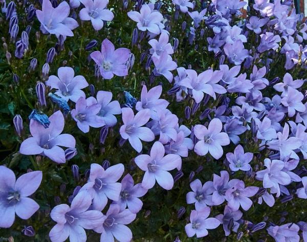 Feeling kinda blue by Meditator