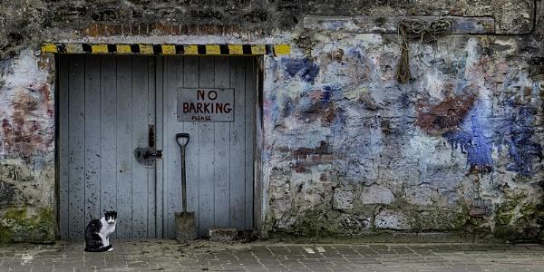 NO BARKING by judidicks