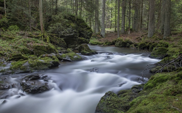 Bavarian Forest stream by philhomer
