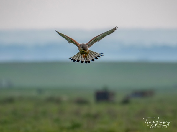 Hover by Terry L
