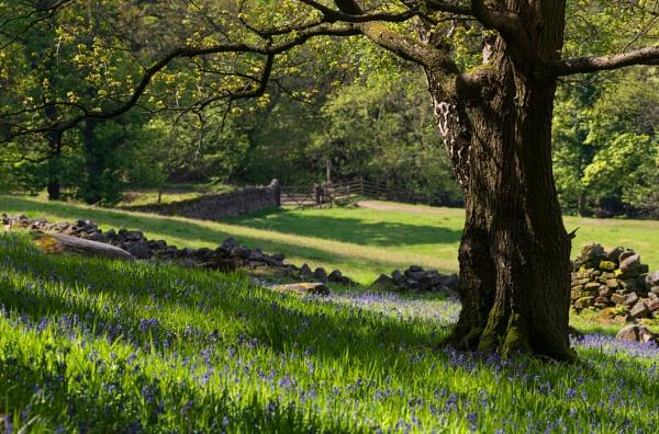Spring by Trevhas