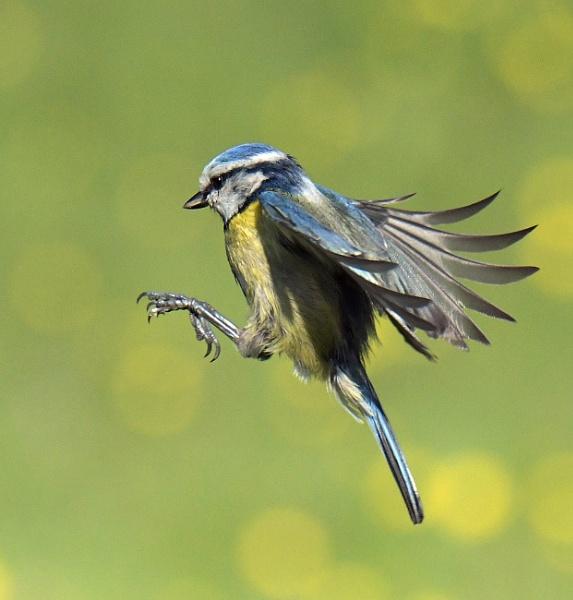 Where\'s the pesky perch? by Holmewood