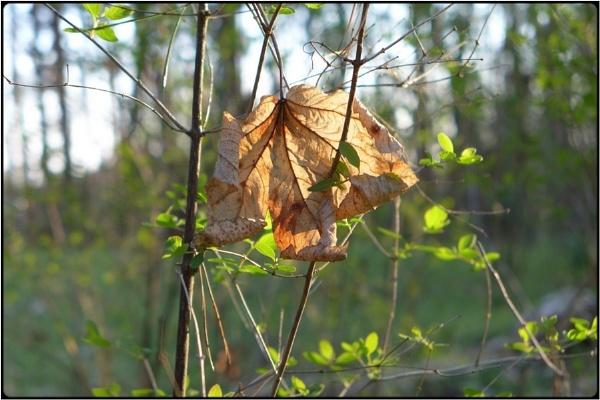 entangled leaves by FabioKeiner