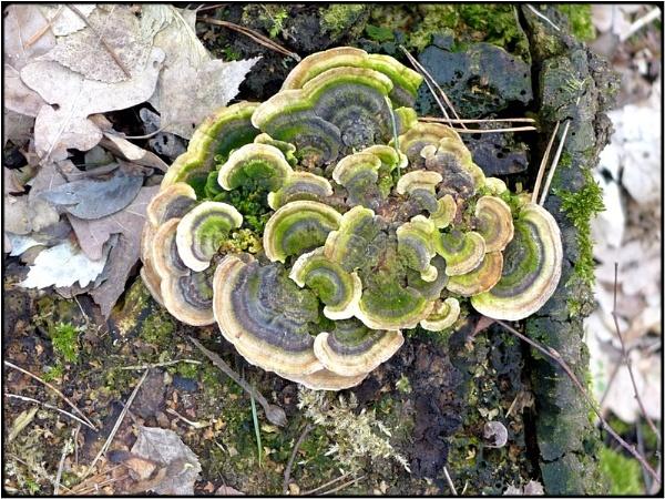 fungus by FabioKeiner