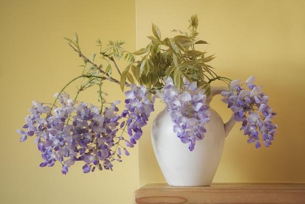 Wisteria by flowerpower59