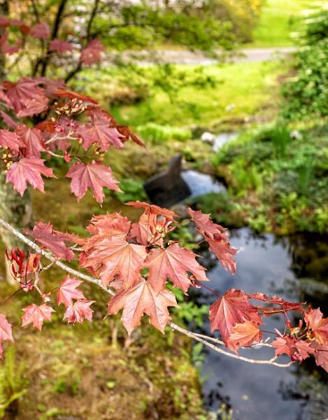 Copper Leaves by NevJB