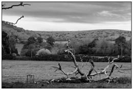 Photo : Fallen Tree