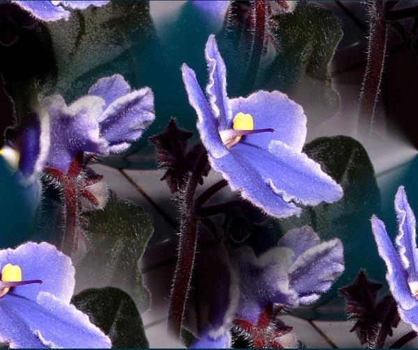 Flower by SniceBag