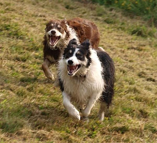 Running wild by SniceBag
