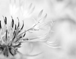 Photo : Ant