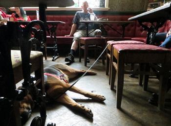 Dog in a Pub