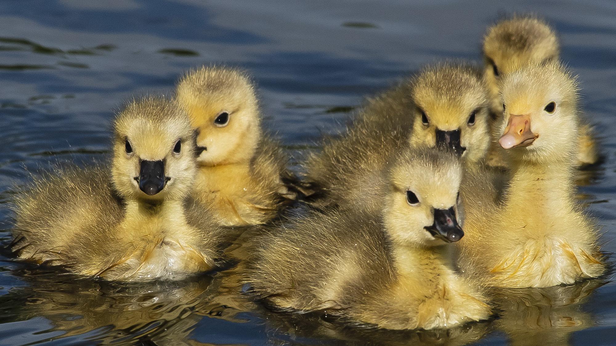 Small Chicks