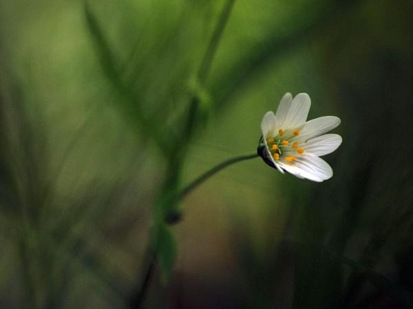 Stitchwort and Grasses by viscostatic