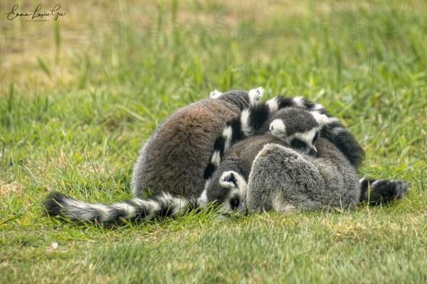 Group Hug. by fufitwo