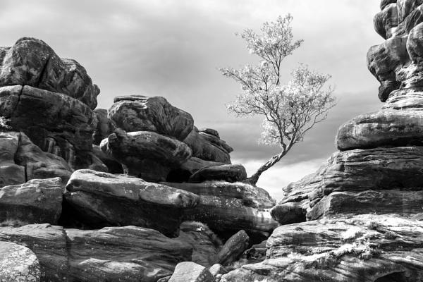 Brimham Rocks Tree by awmcdonald