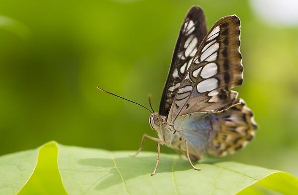 butterfly by bigjim147