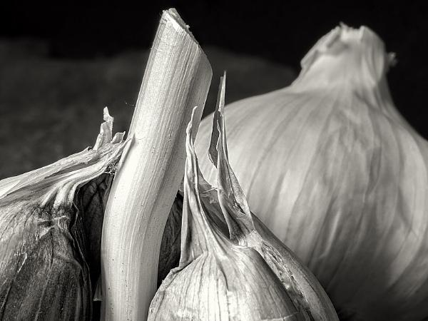 Mild Garlic by kaybee