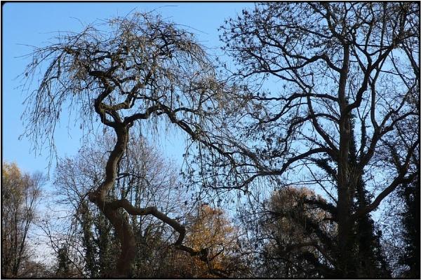 spring trees by FabioKeiner