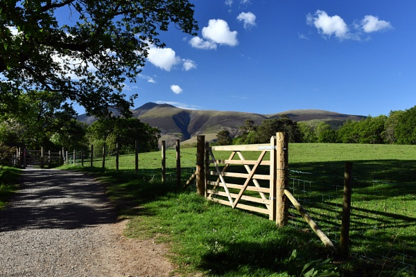 Country lane in the Lake District , Borrowdale near Keswick by onlythepony
