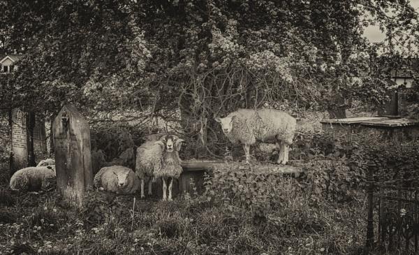Grass cutters by BillRookery
