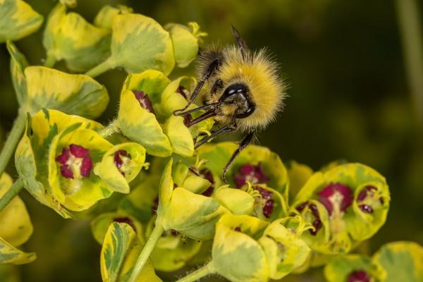 Busy bee by kip55