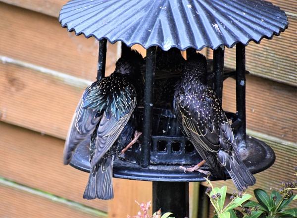 Feeding frenzy by davyskid